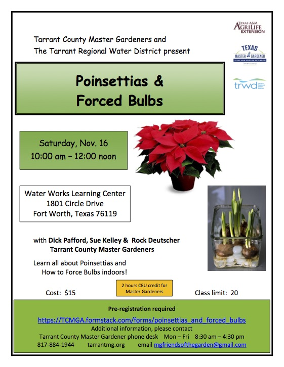 Poinsettias & Forced Bulbs flier